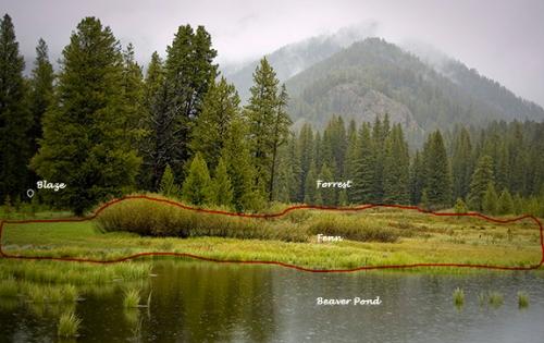 Fen on Beaver Creek, Montana (Richard E. Saunier)